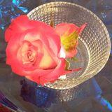 花の持つ力