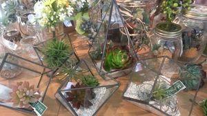 テラリウムに小石を敷いて植物を